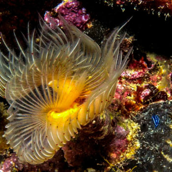 underwater beauty scuba diving in Adriatic Sea