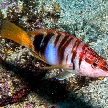 Underwater world Hippocampus Diving Center Istria