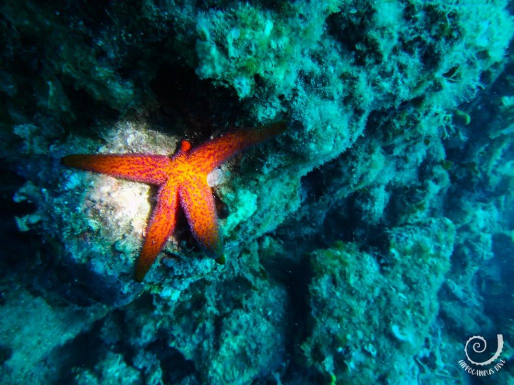 Night Dive Starfish Hippocampus Diving Center Istria