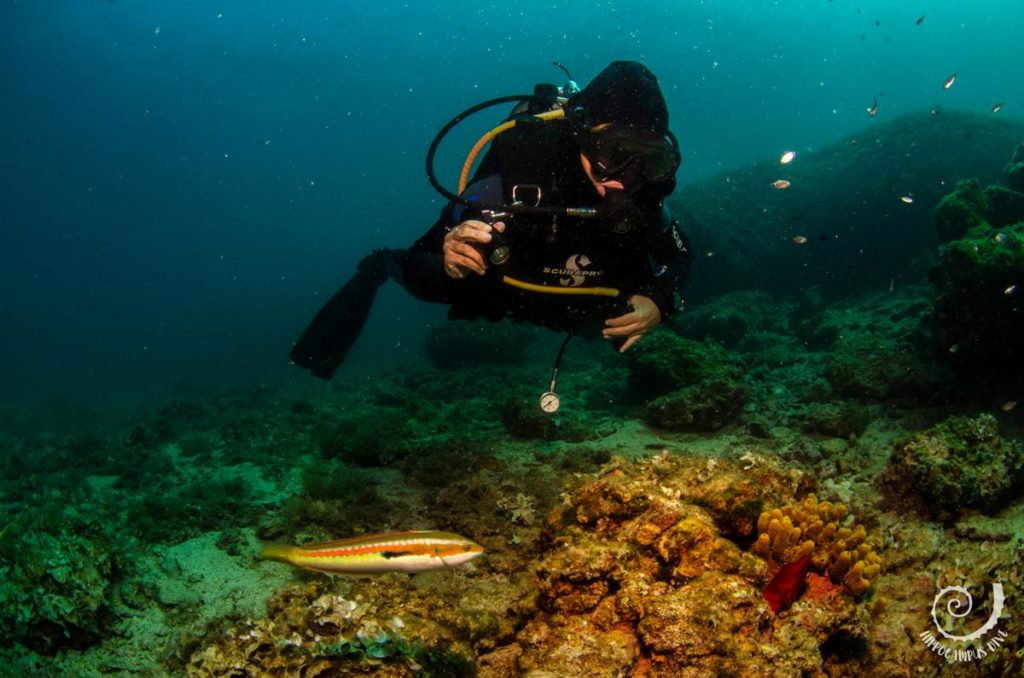 Photo & Video Diving