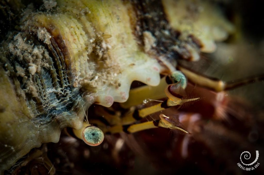 Underwater Macro photography Hippocampus Diving Center Istria