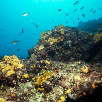 Ship's mast dive location Hippocampus Diving Center Istria